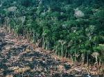 Lindungi hutanku (1)