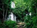 Lindungi hutanku